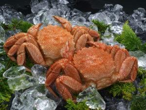 ボイル冷凍毛蟹 8尾/4kgサイズ