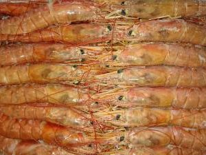 アルゼンチン赤エビL1(10-20尾/kg)